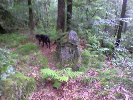 pierre au bonzai