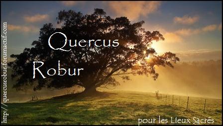 Qercus Robur